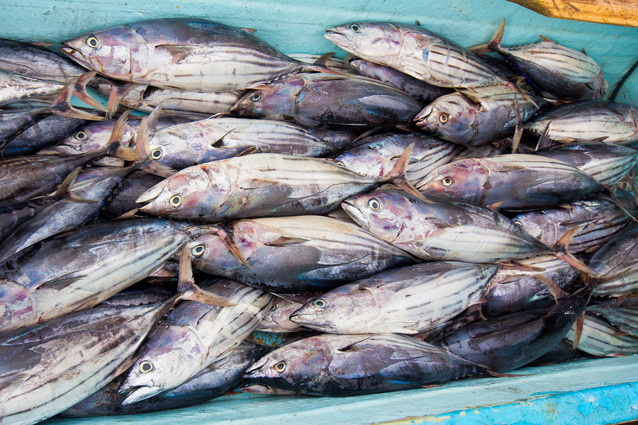 Small business funding commercial fishing business loans for What is commercial fishing
